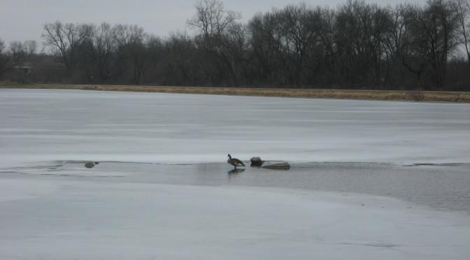 What's Happening at Lake Marion?